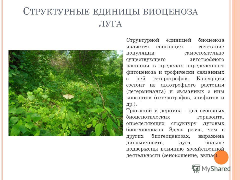 С ТРУКТУРНЫЕ ЕДИНИЦЫ БИОЦЕНОЗА ЛУГА Структурной единицей биоценоза является консорция - сочетание популяции самостоятельно существующего автотрофного растения в пределах определенного фитоценоза и трофически связанных с ней гетеротрофов. Консорция со