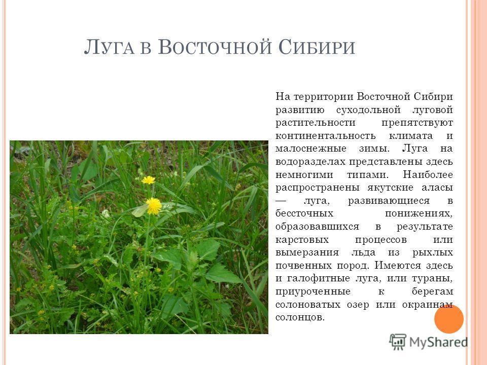 Л УГА В В ОСТОЧНОЙ С ИБИРИ На территории Восточной Сибири развитию суходольной луговой растительности препятствуют континентальность климата и малоснежные зимы. Луга на водоразделах представлены здесь немногими типами. Наиболее распространены якутски