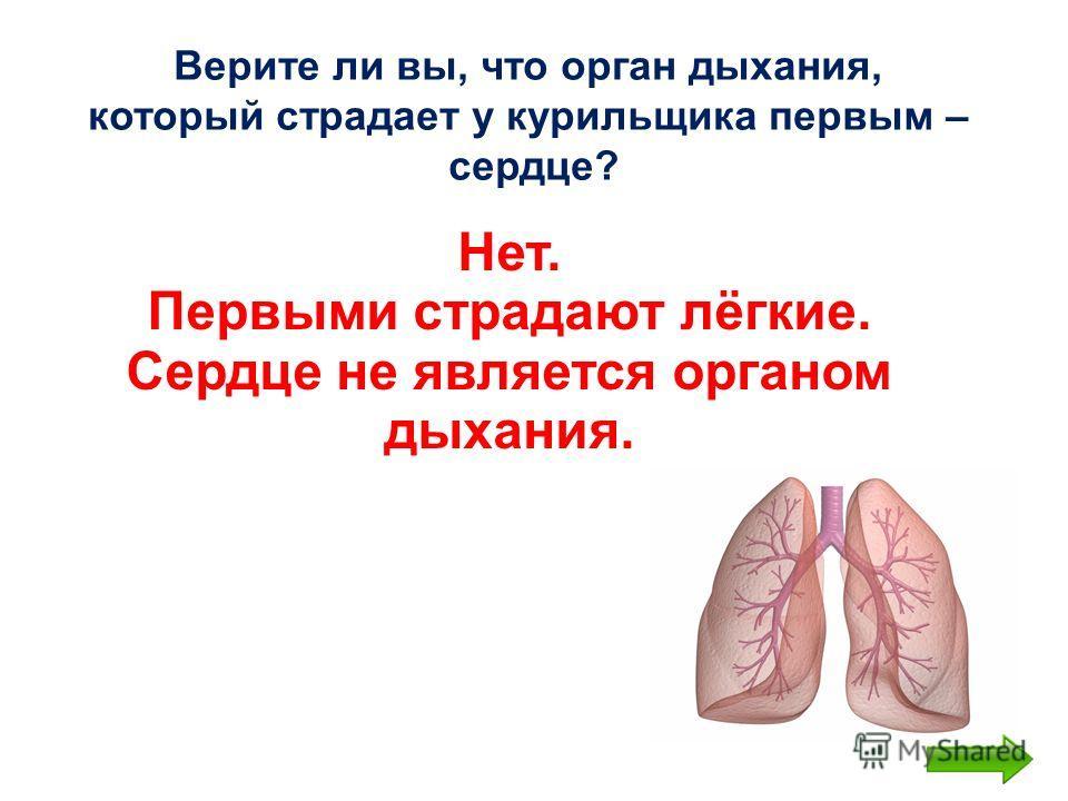 Верите ли вы, что орган дыхания, который страдает у курильщика первым – сердце? Нет. Первыми страдают лёгкие. Сердце не является органом дыхания.