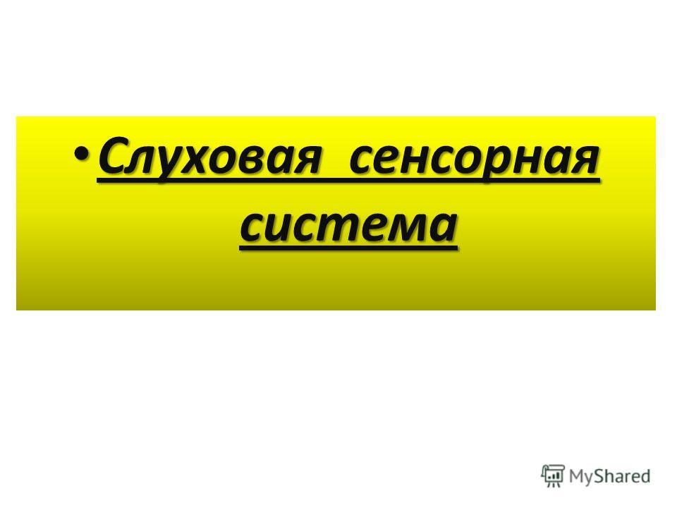 Слуховая сенсорная система Слуховая сенсорная система