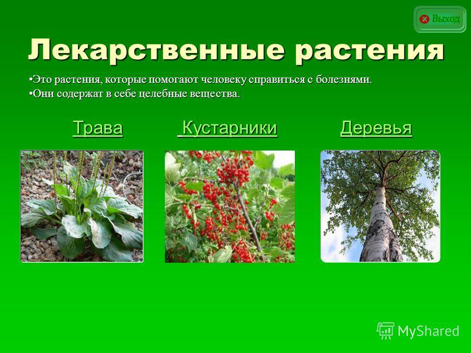 Лекарственные растения Деревья Трава Кустарники Кустарники Это растения, которые помогают человеку справиться с болезнями.Это растения, которые помогают человеку справиться с болезнями. Они содержат в себе целебные вещества.Они содержат в себе целебн