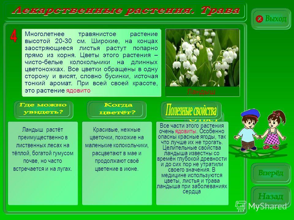 Ландыш Ландыш растёт преимущественно в лиственных лесах на тёплой, богатой гумусом почве, но часто встречается и на лугах. Красивые, нежные цветочки, похожие на маленькие колокольчики, расцветают в мае и продолжают своё цветение в июне. Все части это
