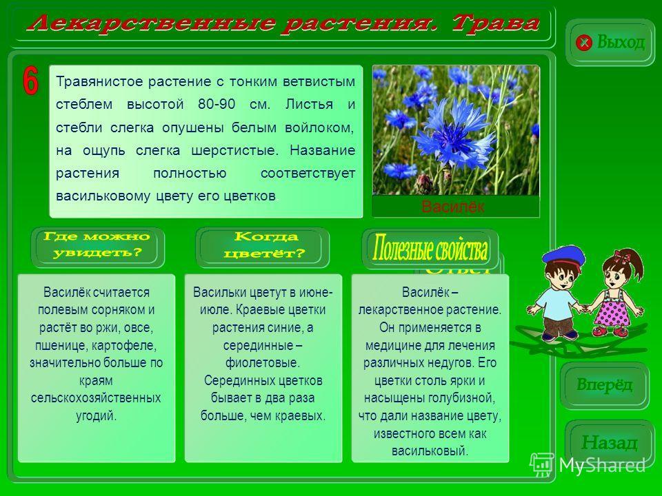 Василёк Василёк считается полевым сорняком и растёт во ржи, овсе, пшенице, картофеле, значительно больше по краям сельскохозяйственных угодий. Васильки цветут в июне- июле. Краевые цветки растения синие, а серединные – фиолетовые. Серединных цветков