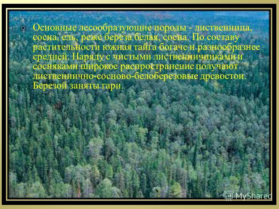 Основные лесообразующие породы - лиственница, сосна, ель, реже береза белая, сосна. По составу растительности южная тайга богаче и разнообразнее средней. Наряду с чистыми лиственничниками и сосняками широкое распространение получают лиственнично - со