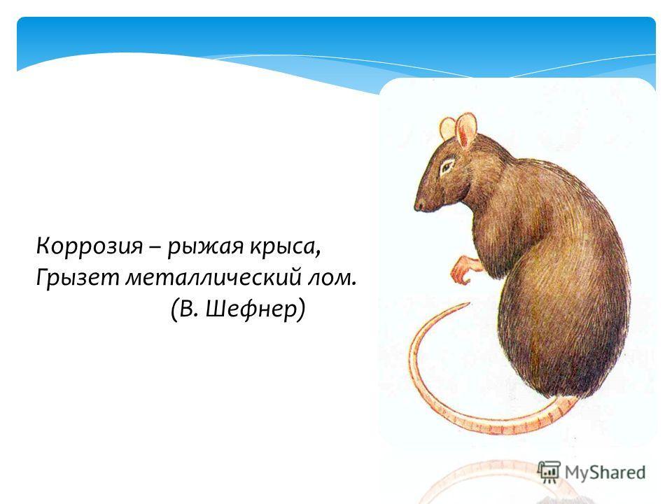 Коррозия – рыжая крыса, Грызет металлический лом. (В. Шефнер)