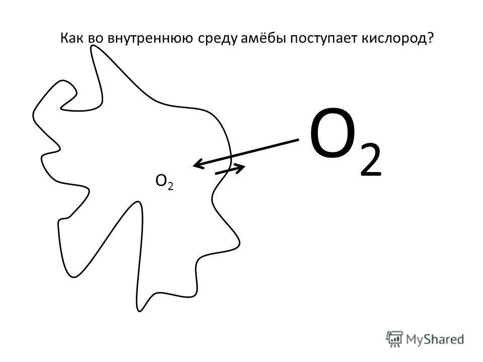 Как во внутреннюю среду амёбы поступает кислород? О2О2 О2О2
