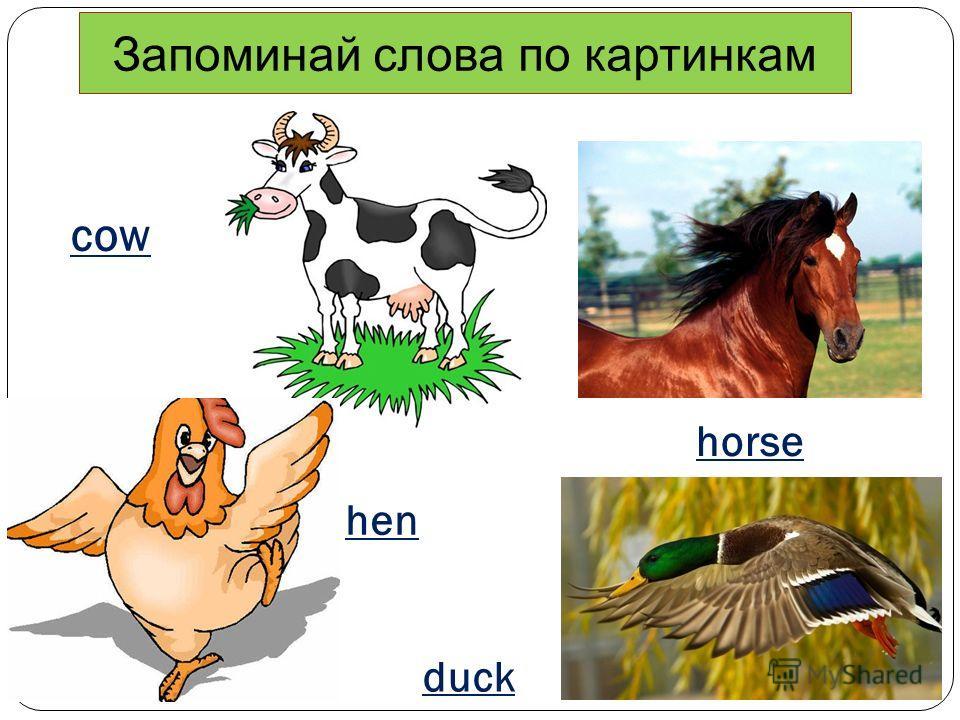 cow duck hen horse Запоминай слова по картинкам