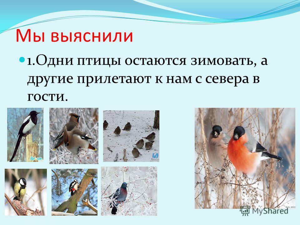 Мы выяснили 1. Одни птицы остаются зимовать, а другие прилетают к нам с севера в гости.