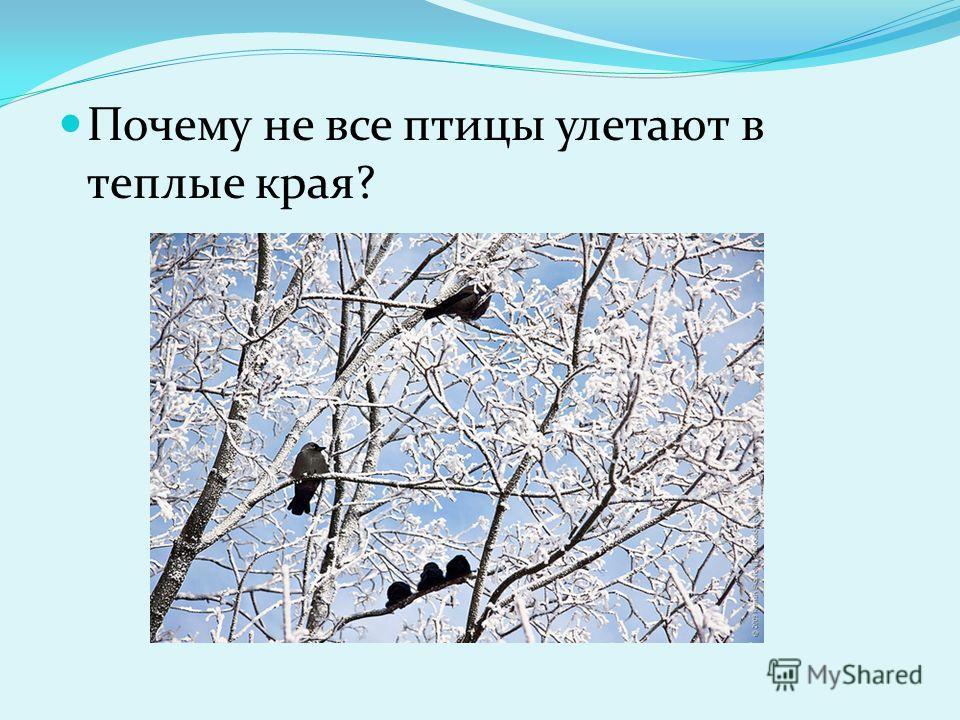 Почему не все птицы улетают в теплые края?