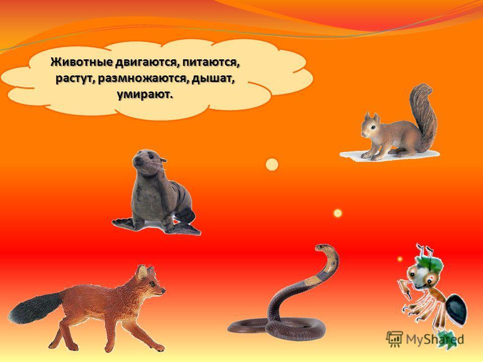 Как живут животные? Мы знаем, что растения живые. А животные живые существа? Докажите это.