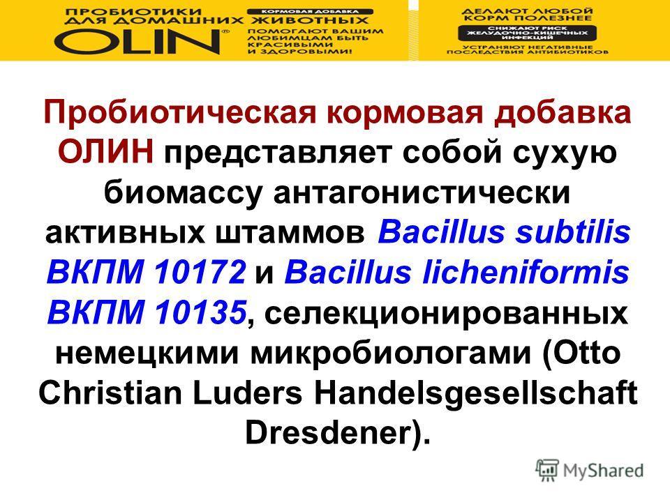 Пробиотическая кормовая добавка ОЛИН представляет собой сухую биомассу антагонистически активных штаммов Bacillus subtilis ВКПМ 10172 и Bacillus licheniformis ВКПМ 10135, селекционированных немецкими микробиологами (Otto Christian Luders Handelsgesel