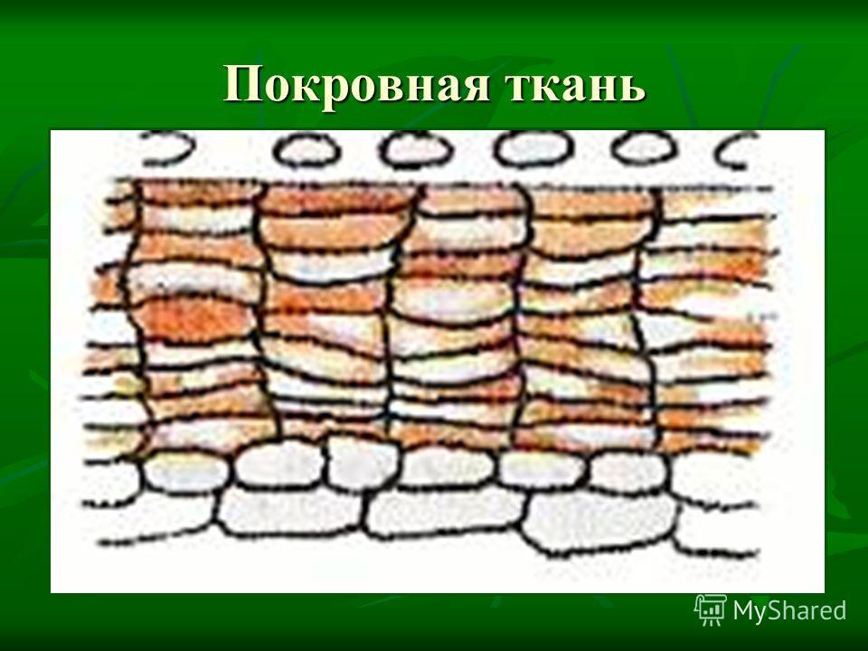 Покровная ткань