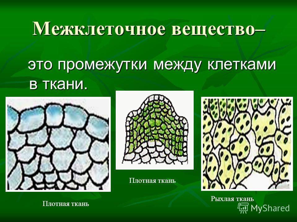 Межклеточное вещество– это промежутки между клетками в ткани. Плотная ткань Рыхлая ткань