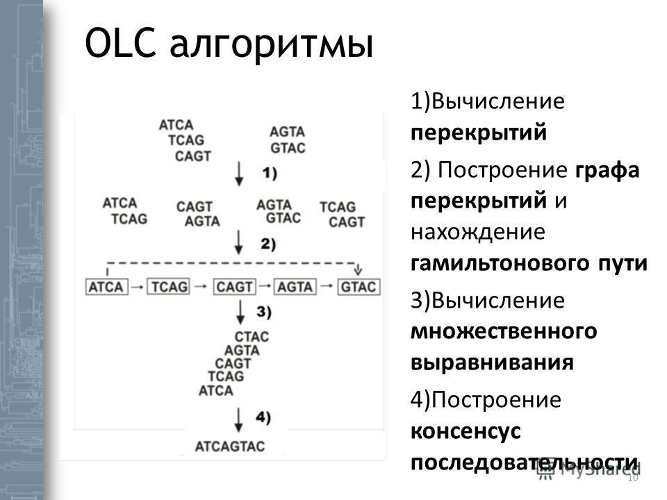 OLC алгоритмы 10 1)Вычисление перекрытий 2) Построение графа перекрытий и нахождение гамильтонового пути 3)Вычисление множественного выравнивания 4)Построение консенсус последовательности