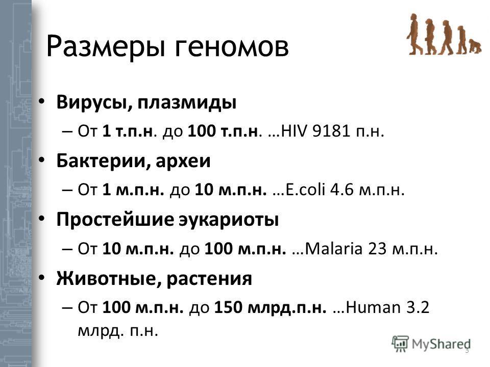 Размеры геномов 3 Вирусы, плазмиды – От 1 т.п.н. до 100 т.п.н. …HIV 9181 п.н. Бактерии, археи – От 1 м.п.н. до 10 м.п.н. …E.coli 4.6 м.п.н. Простейшие эукариоты – От 10 м.п.н. до 100 м.п.н. …Malaria 23 м.п.н. Животные, растения – От 100 м.п.н. до 150