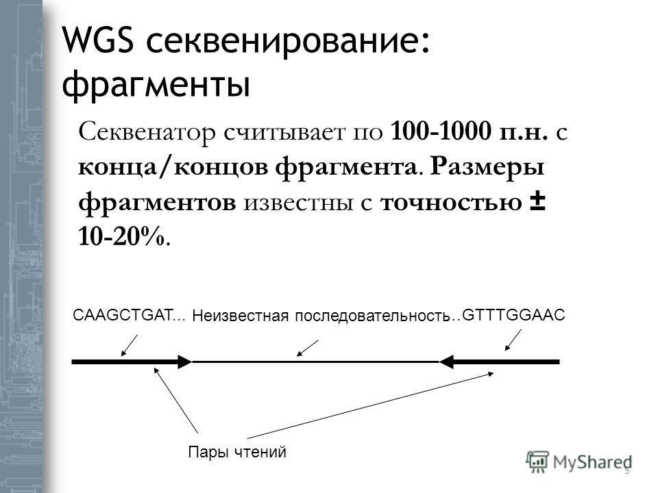 WGS секвенирование: фрагменты 5 Секвенатор считывает по 100-1000 п.н. с конца/концов фрагмента. Размеры фрагментов известны с точностью ± 10-20%. CAAGCTGAT... Пары чтений Неизвестная последовательность …GTTTGGAAC