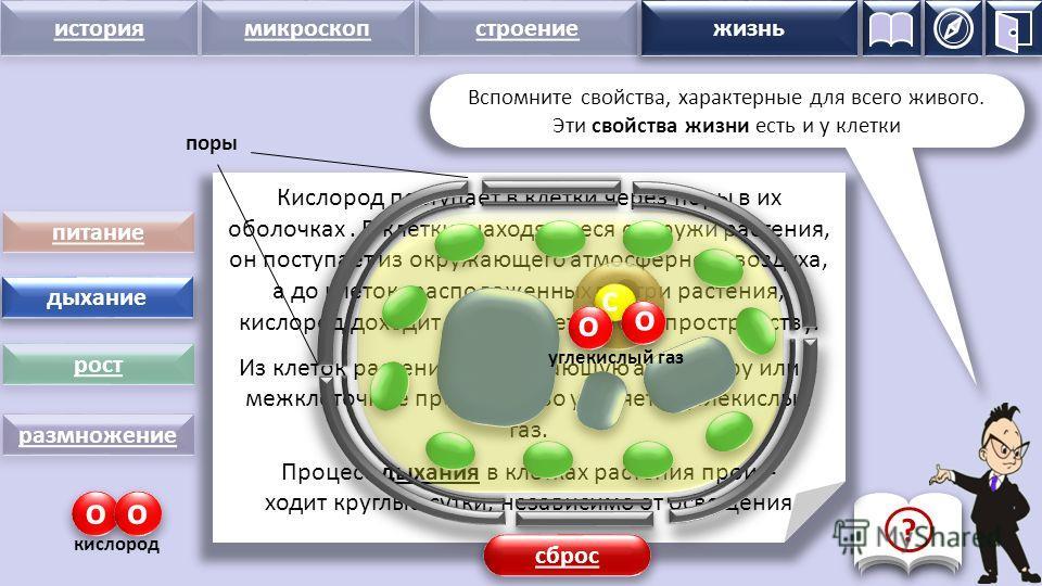 история микроскопстроение жизнь питание дыхание рост размножение Кислород поступает в клетки через поры в их оболочках. В клетки, находящиеся снаружи растения, он поступает из окружающего атмосферного воздуха, а до клеток, расположенных внутри растен