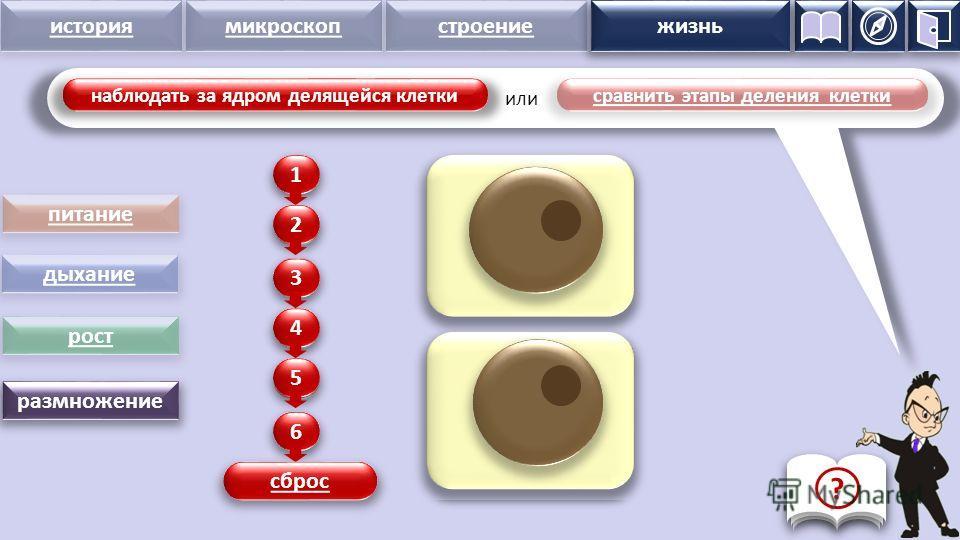 история микроскопстроение жизнь питание дыхание рост размножение наблюдать за ядром делящейся клетки сравнить этапы деления клетки 1 2 3 4 5 6 1 2 3 4 5 6 сброс жизнь