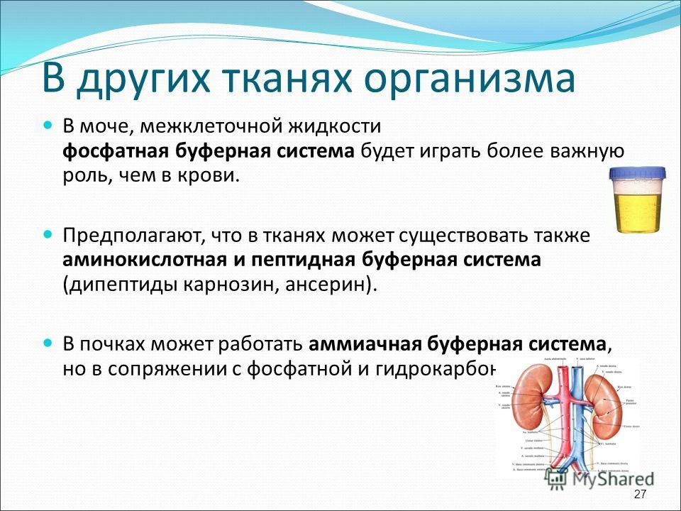 В моче, межклеточной жидкости фосфатная буферная система будет играть более важную роль, чем в крови. Предполагают, что в тканях может существовать также аминокислотная и пептидная буферная система (дипептиды карнозин, ансерин). В почках может работа