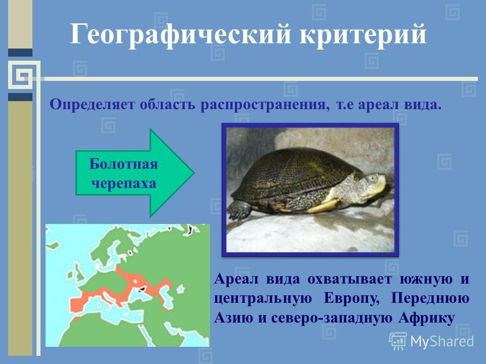 Географический критерий Определяет область распространения, т.е ареал вида. Ареал вида охватывает южную и центральную Европу, Переднюю Азию и северо-западную Африку Болотная черепаха