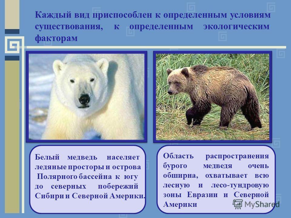Каждый вид приспособлен к определенным условиям существования, к определенным экологическим факторам Белый медведь населяет ледяные просторы и острова Полярного бассейна к югу до северных побережий Сибири и Северной Америки. Область распространения б