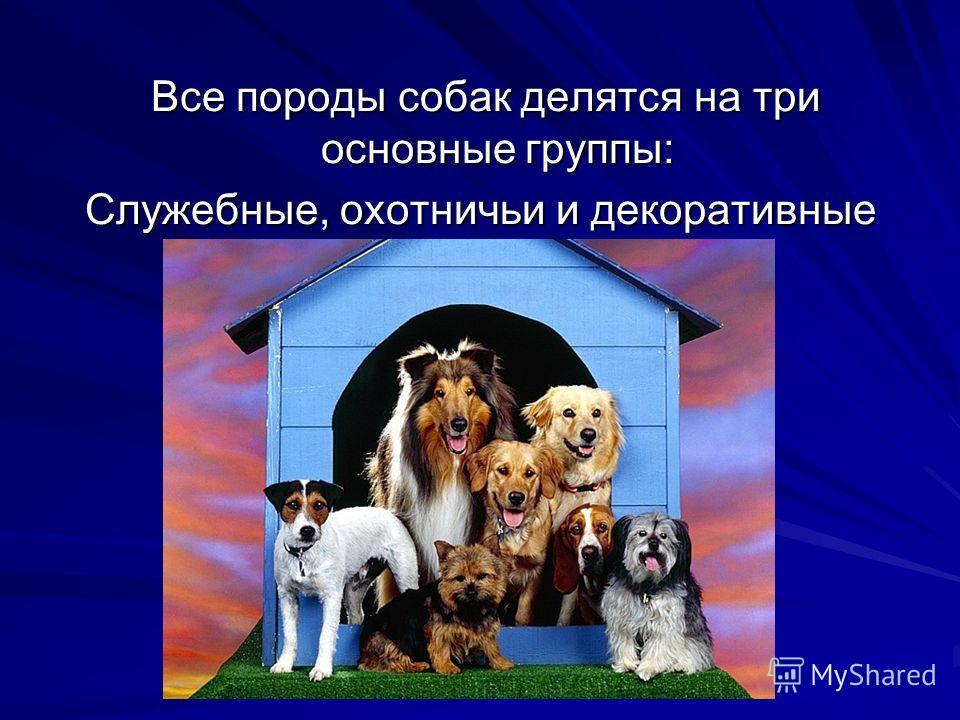 Все породы собак делятся на три основные группы: Все породы собак делятся на три основные группы: Служебные, охотничьи и декоративные