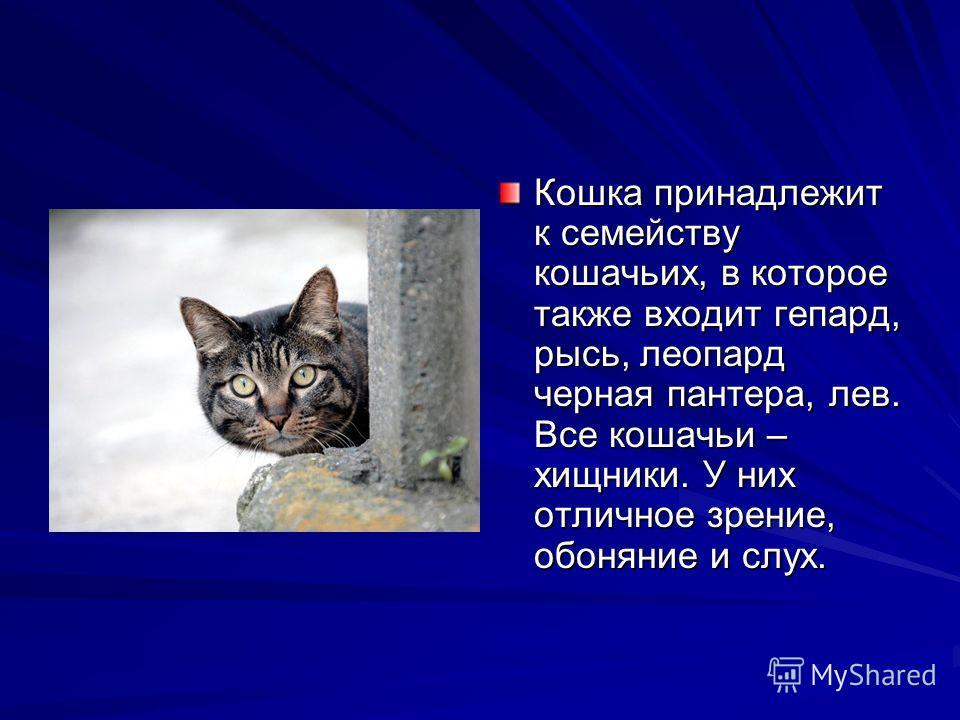 Кошка принадлежит к семейству кошачьих, в которое также входит гепард, рысь, леопард черная пантера, лев. Все кошачьи – хищники. У них отличное зрение, обоняние и слух.