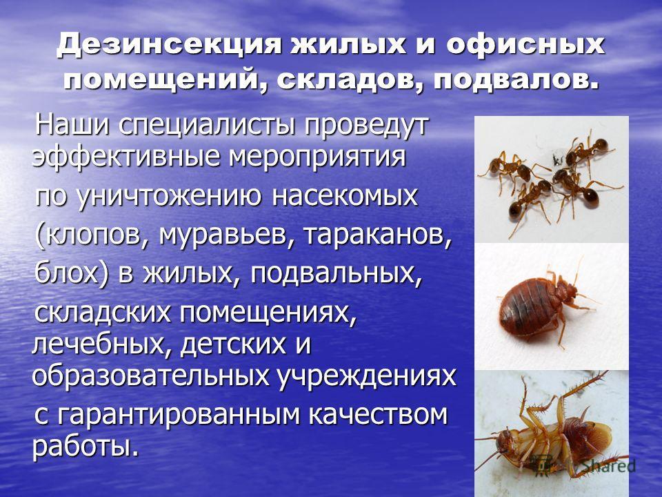 Дезинсекция жилых и офисных помещений, складов, подвалов. Наши специалисты проведут эффективные мероприятия Наши специалисты проведут эффективные мероприятия по уничтожению насекомых по уничтожению насекомых (клопов, муравьев, тараканов, (клопов, мур