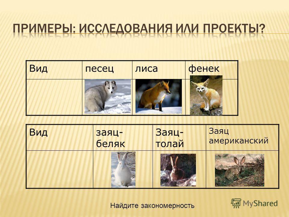 Видпесецлисафенек Видзаяц- беляк Заяц- толай Заяц американский Найдите закономерность