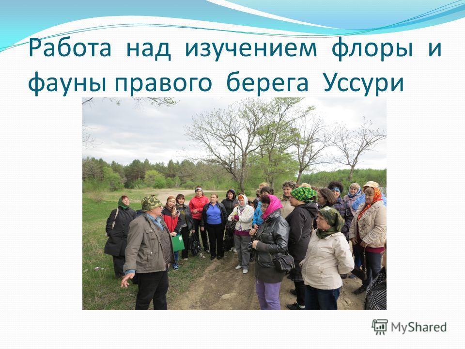 Работа над изучением флоры и фауны правого берега Уссури
