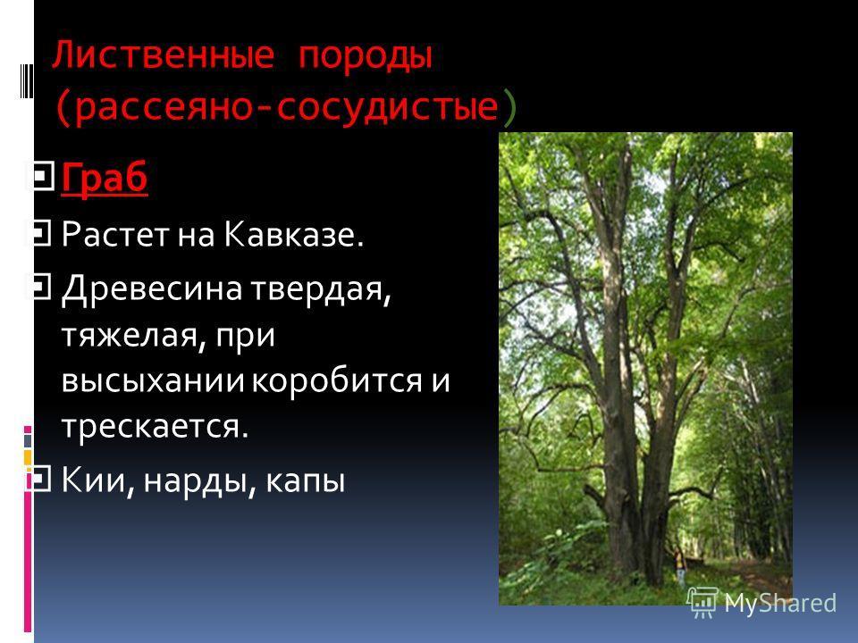 Лиственные породы (рассеяно-сосудистые) Граб Растет на Кавказе. Древесина твердая, тяжелая, при высыхании коробится и трескается. Кии, нарды, капы