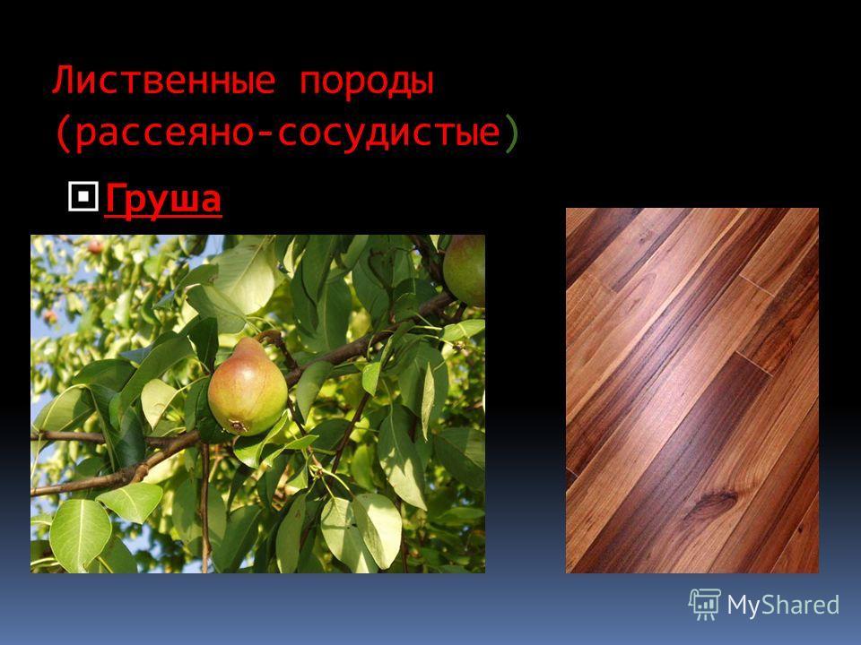 Лиственные породы (рассеяно-сосудистые) Груша