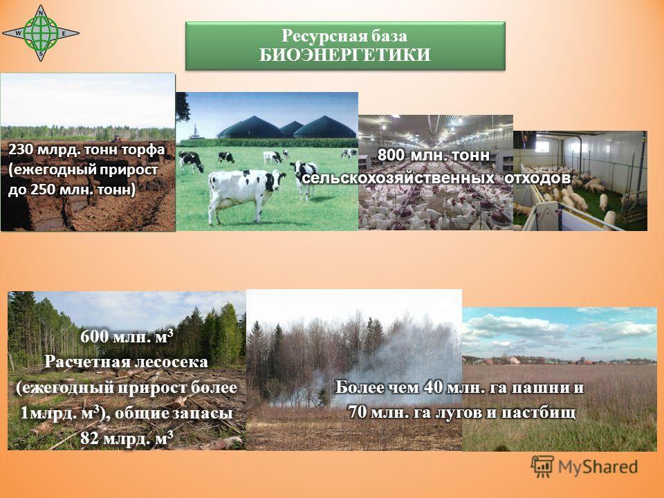Ресурсная база БИОЭНЕРГЕТИКИ Ресурсная база БИОЭНЕРГЕТИКИ