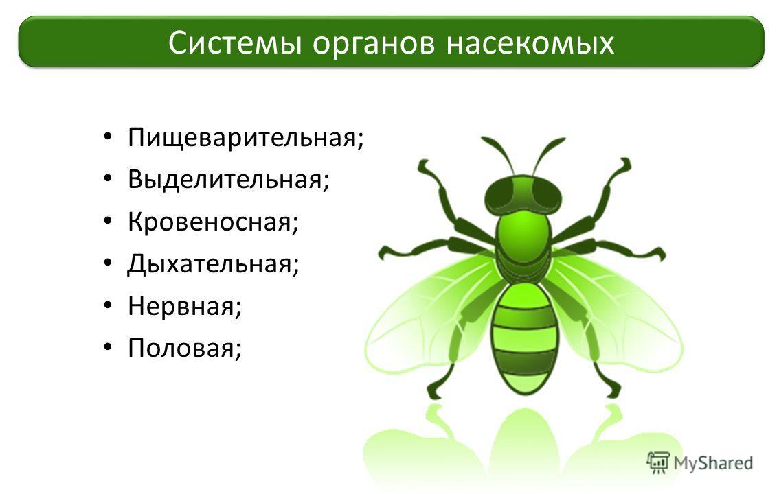 Пищеварительная; Выделительная; Кровеносная; Дыхательная; Нервная; Половая; Системы органов насекомых