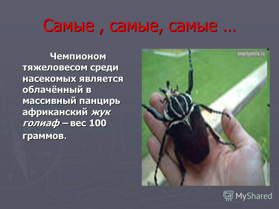 Самые, самые, самые … Чемпионом тяжеловесом среди насекомых является облачённый в массивный панцирь африканский жук голиаф – вес 100 граммов. Чемпионом тяжеловесом среди насекомых является облачённый в массивный панцирь африканский жук голиаф – вес 1
