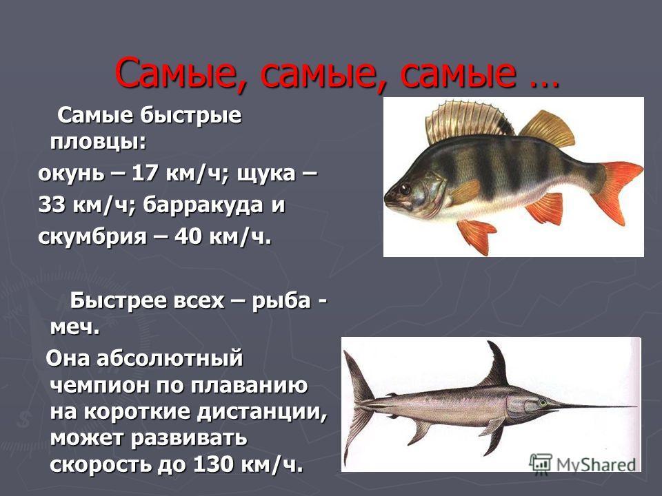 Самые, самые, самые … Самые быстрые пловцы: Самые быстрые пловцы: окунь – 17 км/ч; щука – окунь – 17 км/ч; щука – 33 км/ч; барракуда и 33 км/ч; барракуда и скумбрия – 40 км/ч. скумбрия – 40 км/ч. Быстрее всех – рыба - меч. Быстрее всех – рыба - меч.