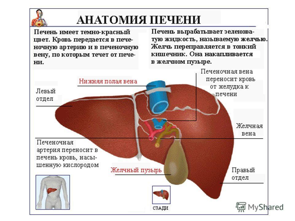 Диета при болезнях печени и желчного пузыря диета