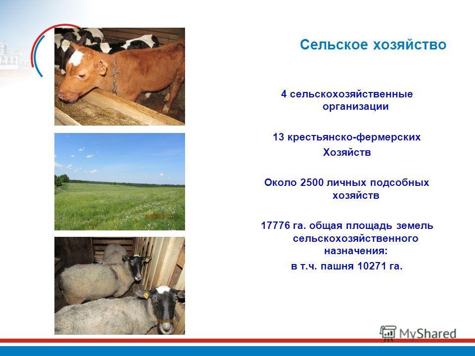 Сельское хозяйство 4 сельскохозяйственные организации 13 крестьянско-фермерских Хозяйств Около 2500 личных подсобных хозяйств 17776 га. общая площадь земель сельскохозяйственного назначения: в т.ч. пашня 10271 га.