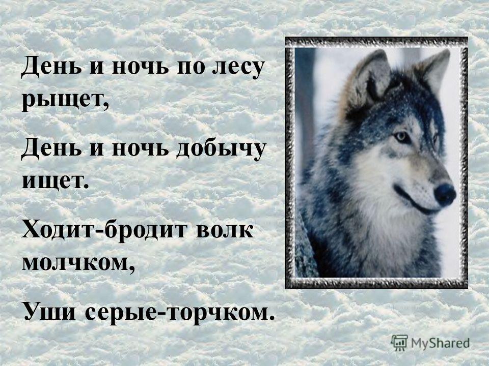 День и ночь по лесу рыщет, День и ночь добычу ищет. Ходит-бродит волк молчком, Уши серые-торчком.