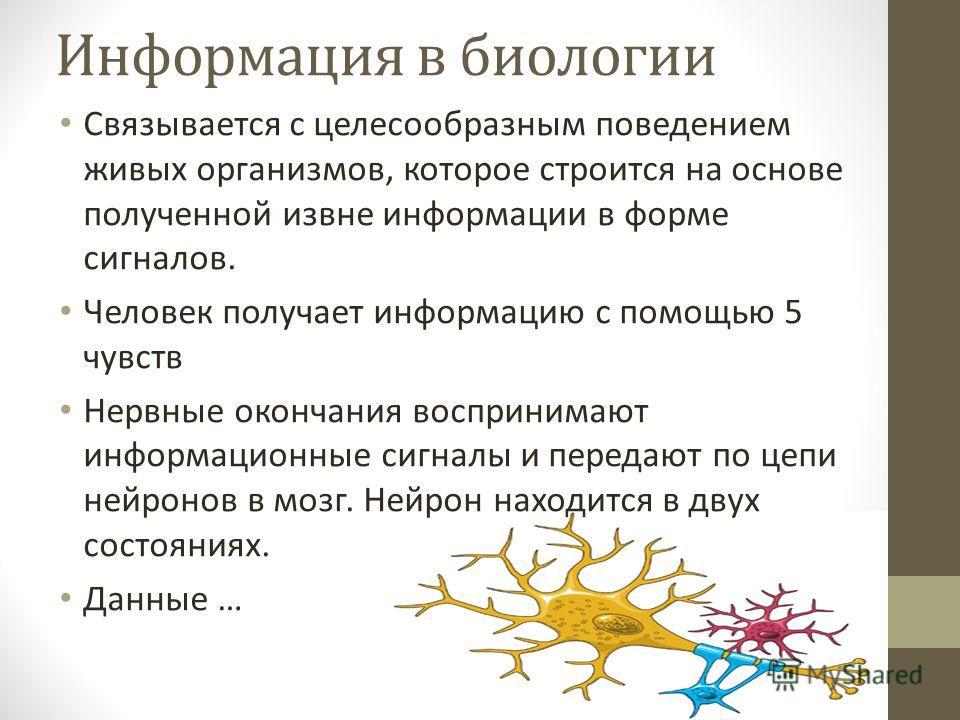 Информация в биологии Связывается с целесообразным поведением живых организмов, которое строится на основе полученной извне информации в форме сигналов. Человек получает информацию с помощью 5 чувств Нервные окончания воспринимают информационные сигн