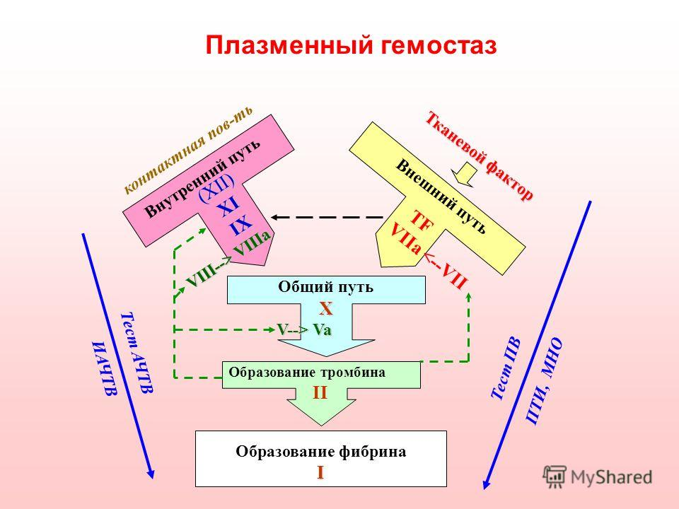 Плазменный гемостаз X V--> Va Образование тромбина II Образование фибринаI Общий путь (XII)XIIX VIII--> VIIIa VIII--> VIIIa Внутренний путь TF VIIa