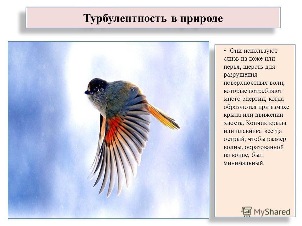 Турбулентность в природе Они используют слизь на коже или перья, шерсть для разрушения поверхностных волн, которые потребляют много энергии, когда образуются при взмахе крыла или движении хвоста. Кончик крыла или плавника всегда острый, чтобы размер