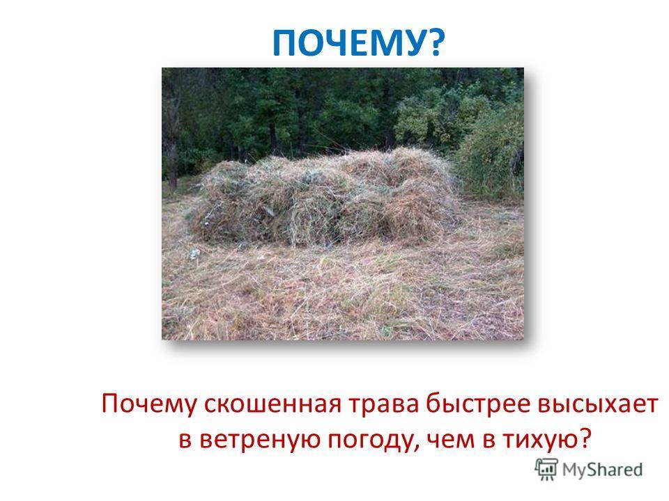 Почему скошенная трава быстрее высыхает в ветреную погоду, чем в тихую? ПОЧЕМУ?
