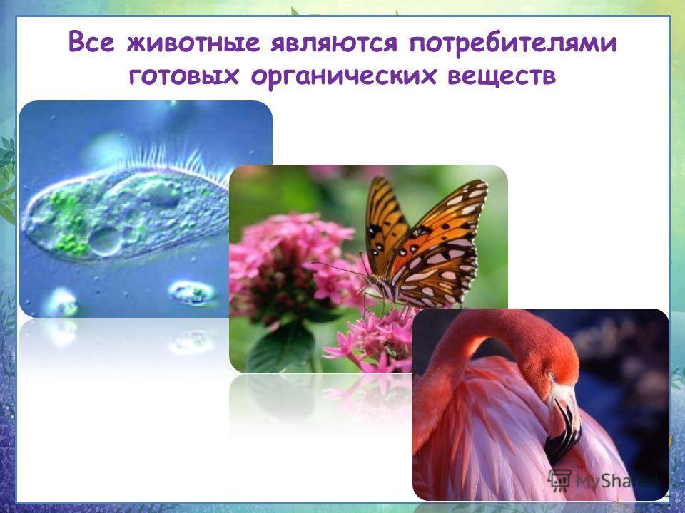 Все животные являются потребителями готовых органических веществ