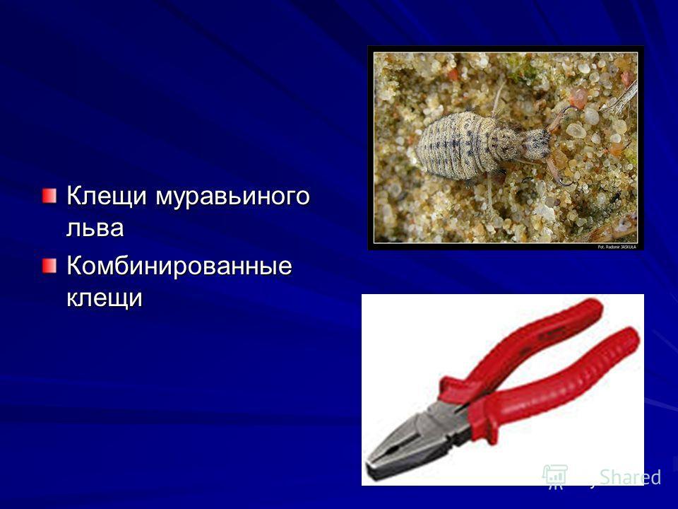 Клещи муравьиного льва Комбинированные клещи