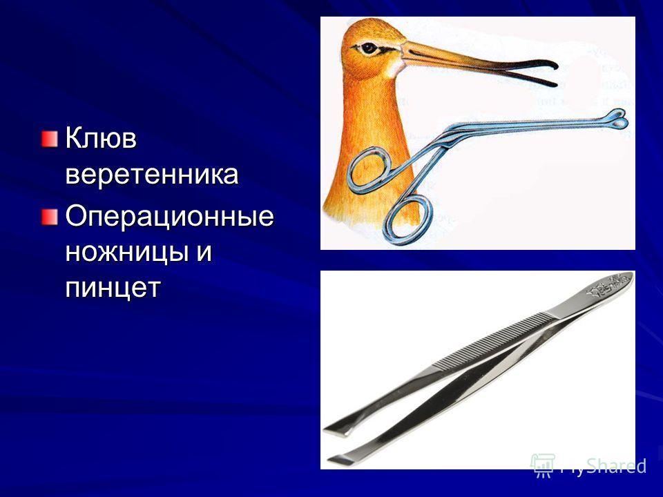 Клюв веретенника Операционные ножницы и пинцет