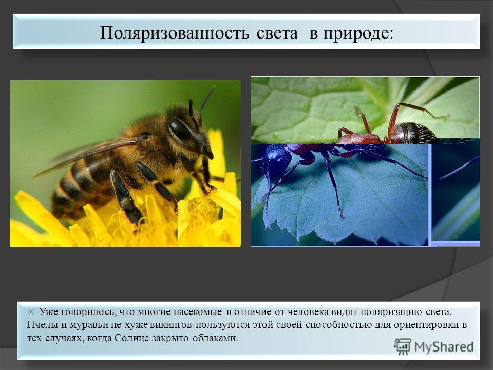 Уже говорилось, что многие насекомые в отличие от человека видят поляризацию света. Пчелы и муравьи не хуже викингов пользуются этой своей способностью для ориентировки в тех случаях, когда Солнце закрыто облаками. Поляризованность света в природе: