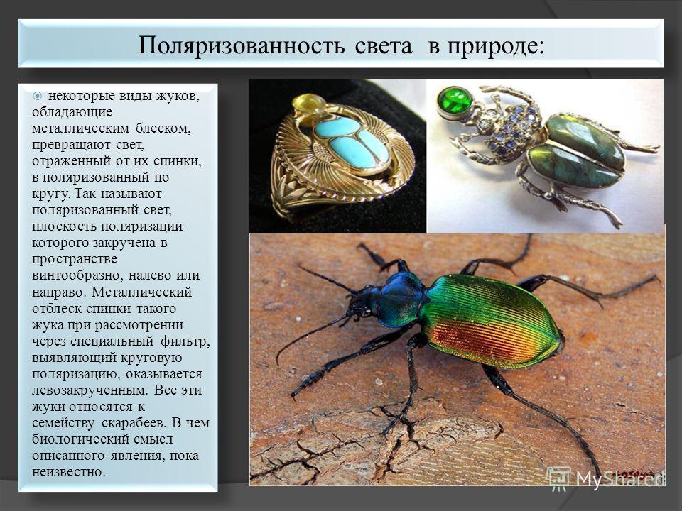 некоторые виды жуков, обладающие металлическим блеском, превращают свет, отраженный от их спинки, в поляризованный по кругу. Так называют поляризованный свет, плоскость поляризации которого закручена в пространстве винтообразно, налево или направо. М