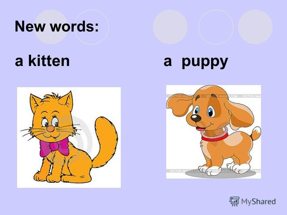 New words: a kitten a puppy