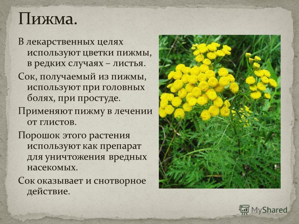 В лекарственных целях используют цветки пижмы, в редких случаях – листья. Сок, получаемый из пижмы, используют при головных болях, при простуде. Применяют пижму в лечении от глистов. Порошок этого растения используют как препарат для уничтожения вред